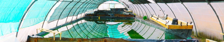 Spiruline Foret Vert