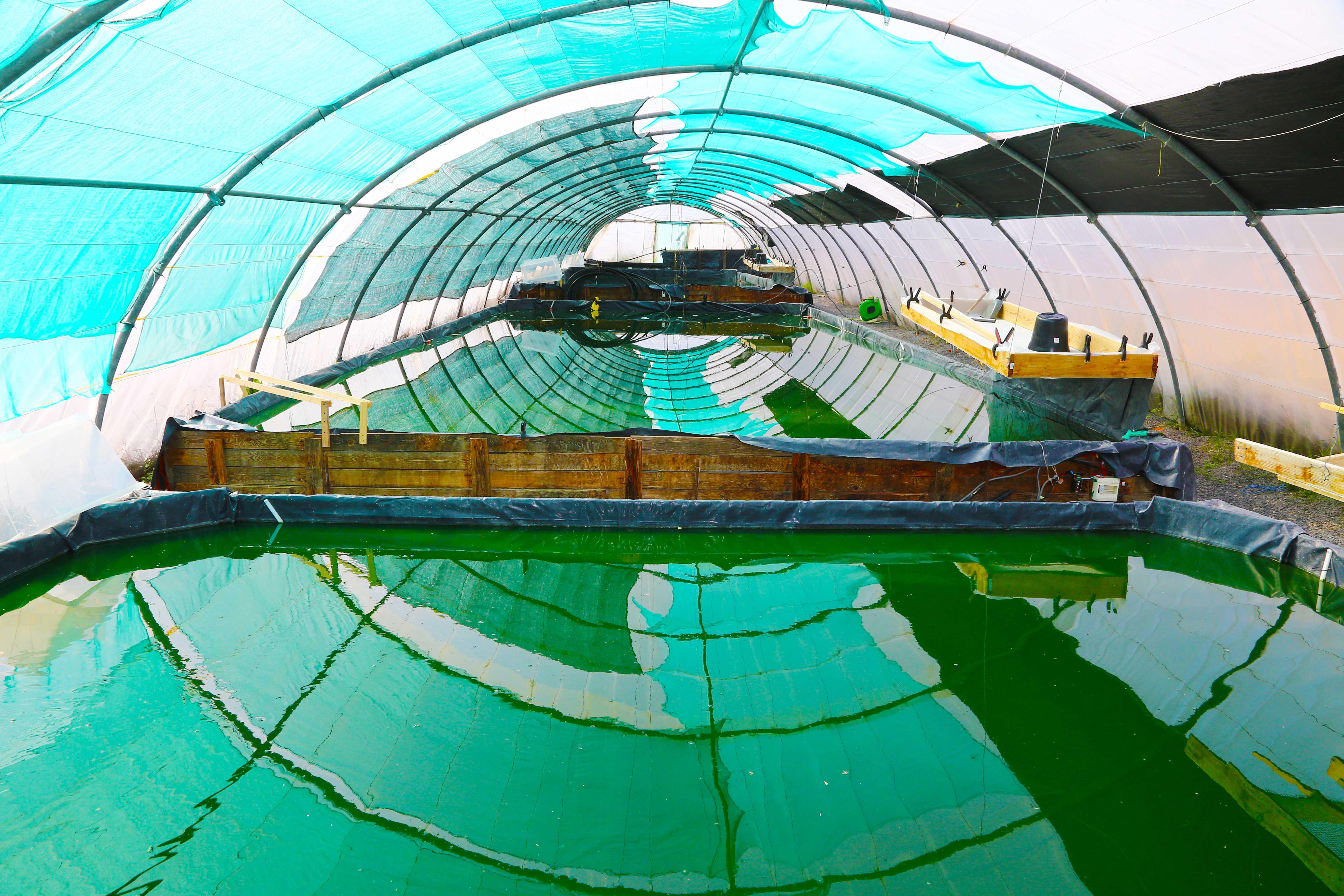 Bassins de culture de Spiruline
