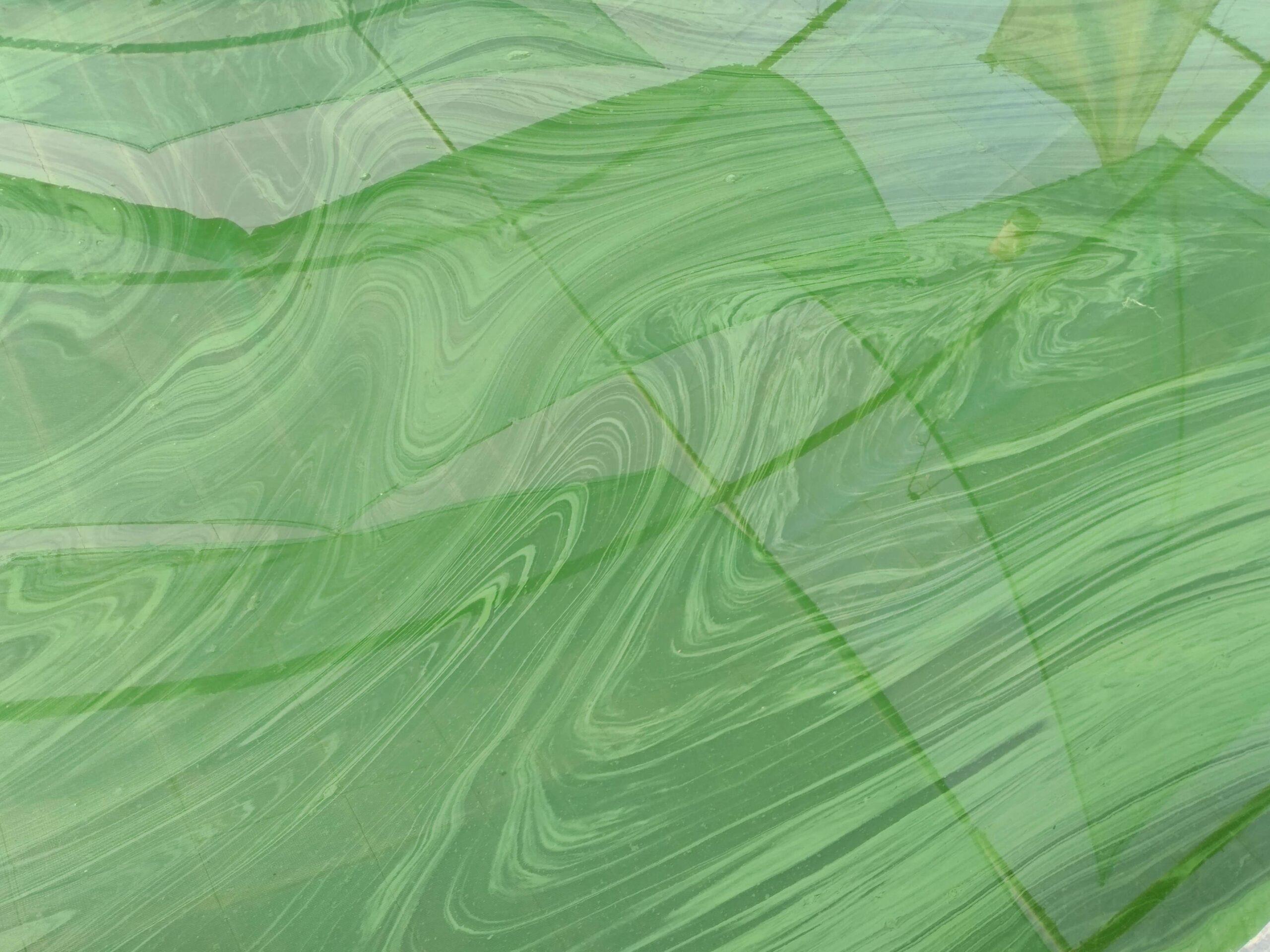 la Spiruline c'est quoi: photo de spiruline dans un bassin